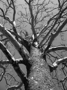 tree-17708_1280