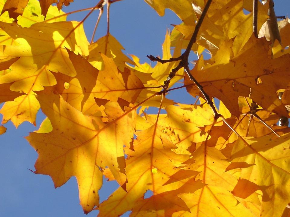 red-oak-61975_1280