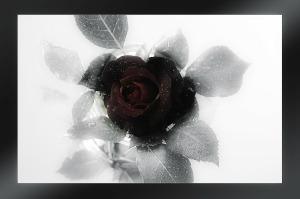 mourning-229118_1280